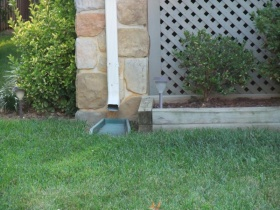 Downspout Grass
